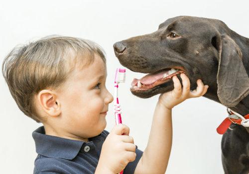 odontoiatria-prevenzione-vicenza_3